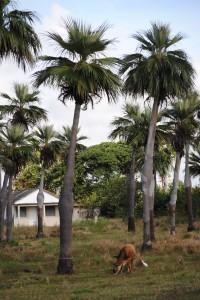 KUBA_090